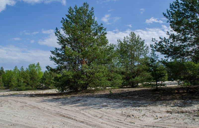 De zomerlandschap met Wit Zand royalty-vrije stock afbeeldingen