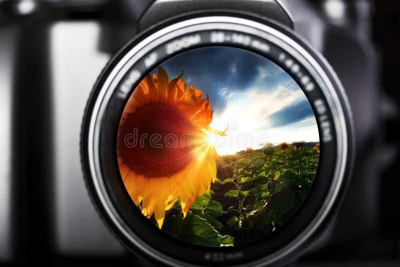 De zomerlandschap met zonnebloemen in de cameralens stock fotografie