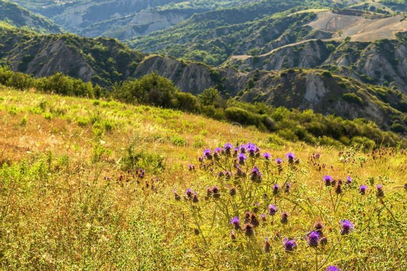 De zomerlandschap over het nationale park van Aliano badlands in Val D 'Agri, Basilicata stock foto's