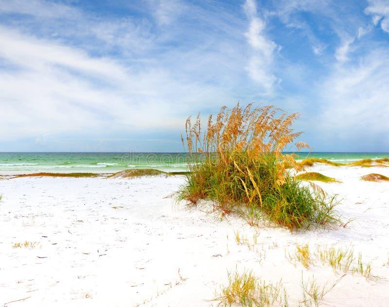 De zomerlandschap van een mooi strand van Florida stock foto