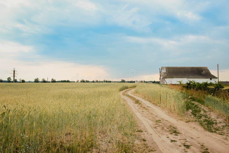 De zomerlandschap van het gebied met aartjes op de achtergrond van zich weg het uitrekken in de afstand en het oude eenzame huis stock fotografie