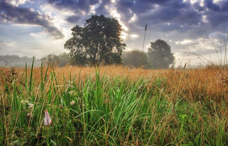 De zomerlandschap van ochtendweide met bomen op horizon en bewolkte hemel De aard van de lente Toneelgebied bij vroege ochtend stock afbeelding
