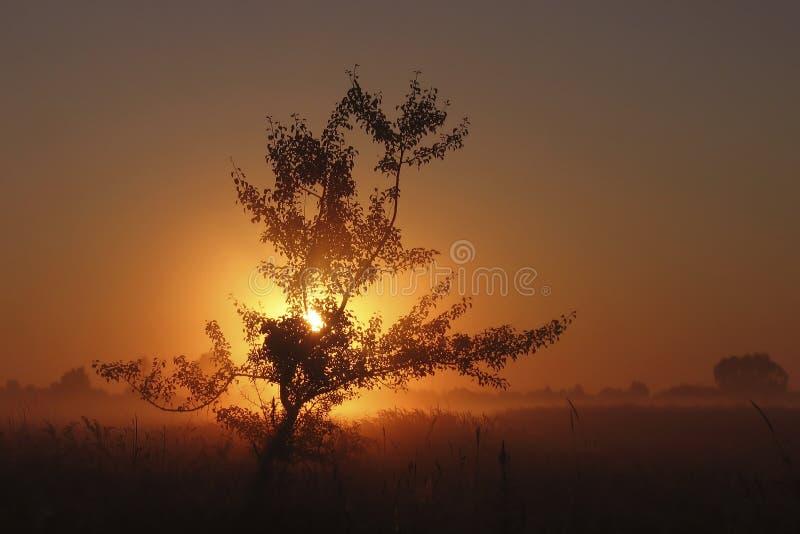 De zomerlandschap - Zonsondergang stock afbeelding