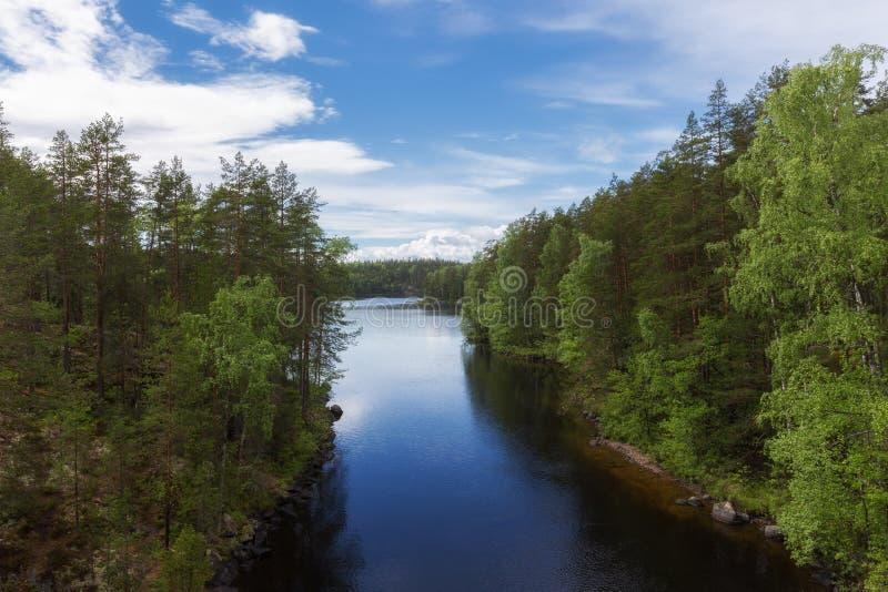 De zomermening van mooi meer en bos royalty-vrije stock afbeelding