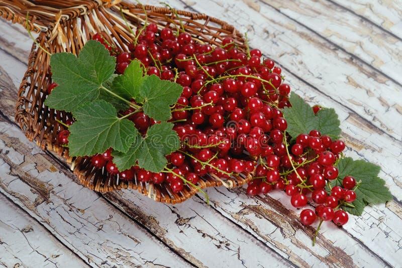 De de zomeroogst van bessen De rode aalbes met groene bladeren is in een rieten mand op een lichte lijst stock fotografie