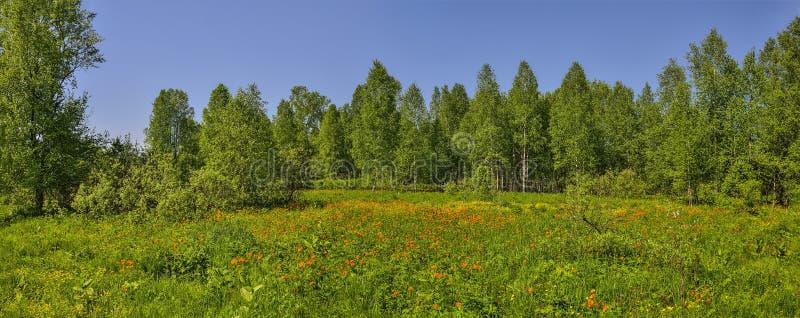 De zomerpanorama van landschap met tot bloei komende bosopen plek royalty-vrije stock afbeeldingen