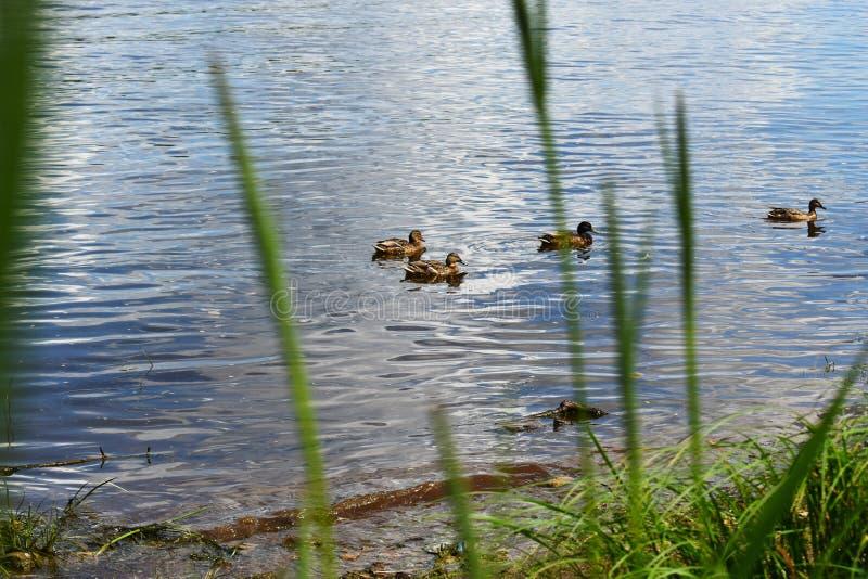 De zomerpark in heldere dag royalty-vrije stock foto's