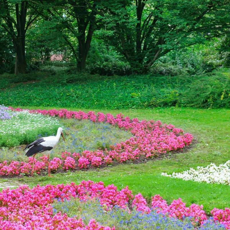 De zomerpark met mooie bloemen Een ooievaar loopt tegen de achtergrond van een bloembed royalty-vrije stock foto