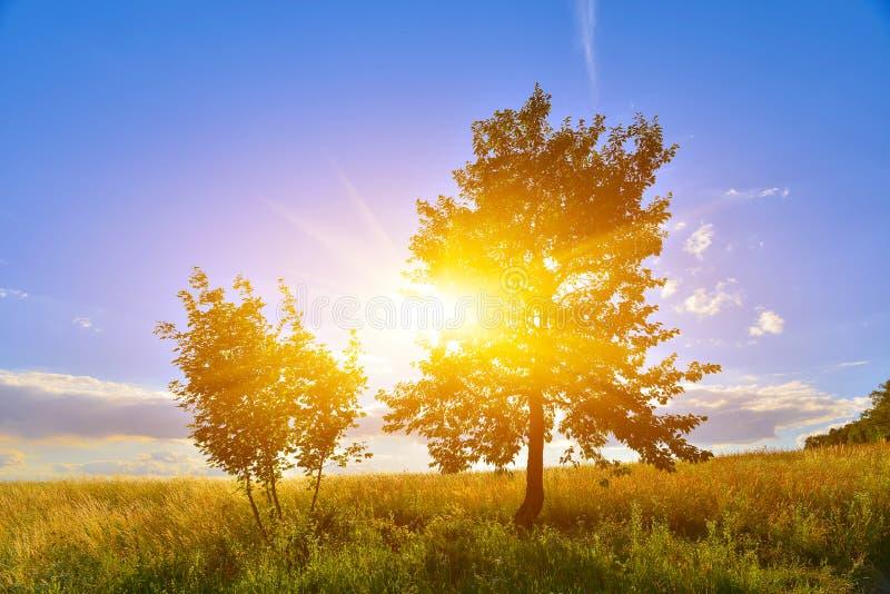 De zomerplatteland met weinig bomen royalty-vrije stock foto