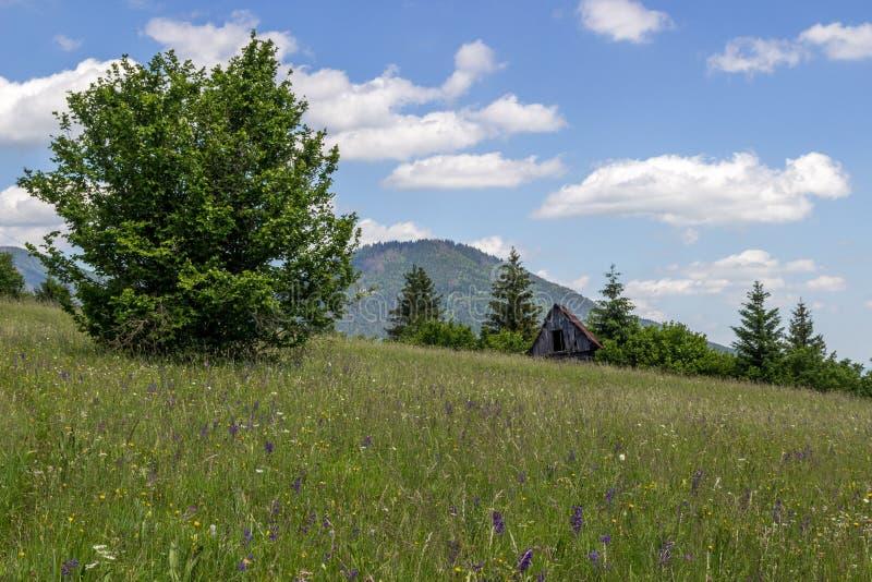 De zomerplatteland in Slowakije stock foto