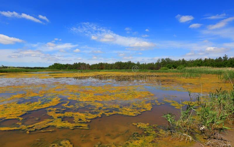 De zomerscène op meer in bos royalty-vrije stock fotografie