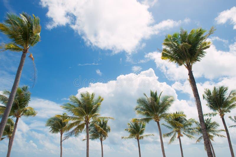 De zomervakantie en vakantieconcept Inspirational tropische beac stock afbeelding