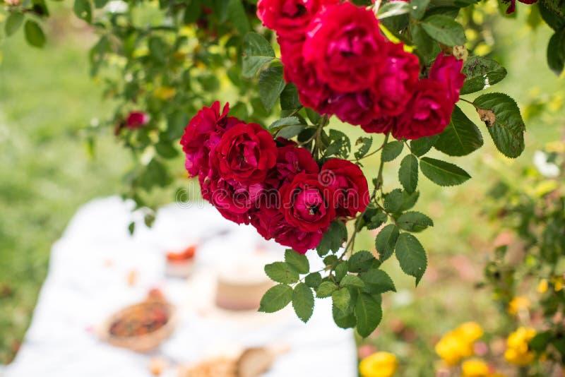 De zomervakantie in de tuin onder de rode rozen royalty-vrije stock foto's