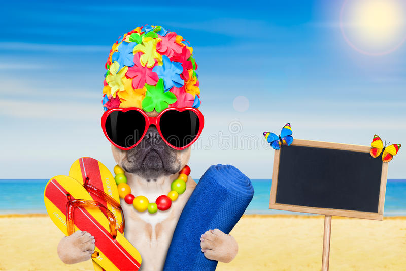 De zomervakantie van het hondstrand royalty-vrije stock foto's
