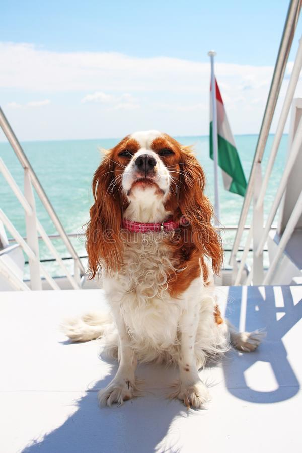 De zomervakantie van de schiprondvaart met hond royalty-vrije stock foto's