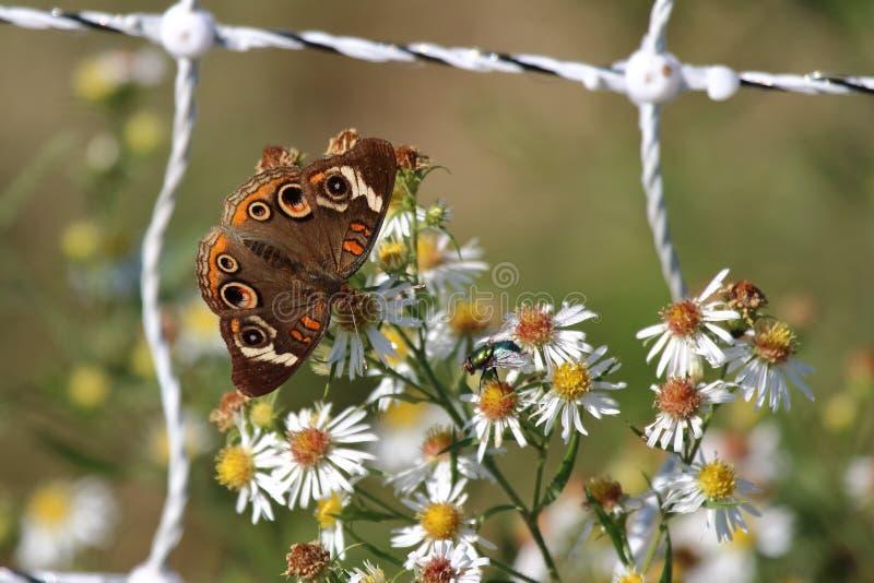 De zomervleugels stock fotografie