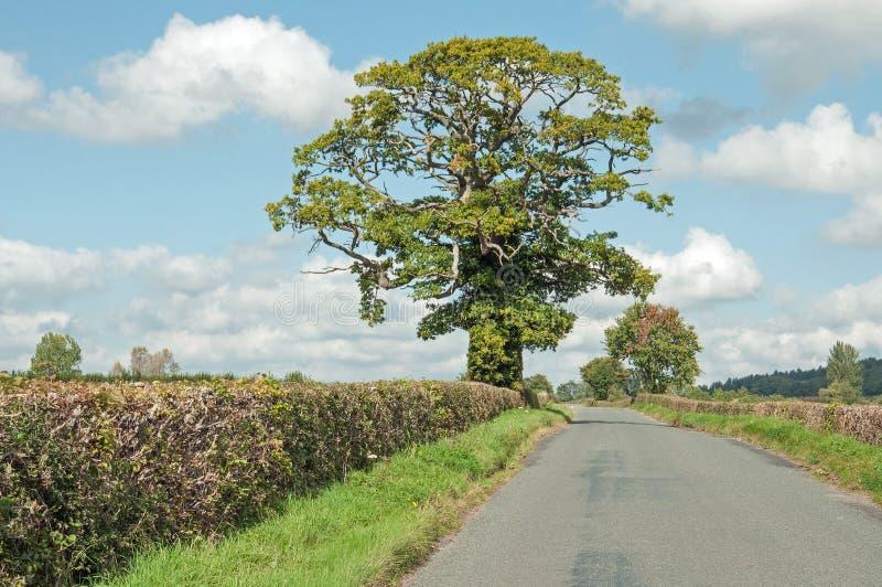 De zomerwegen in het Engelse platteland royalty-vrije stock foto's