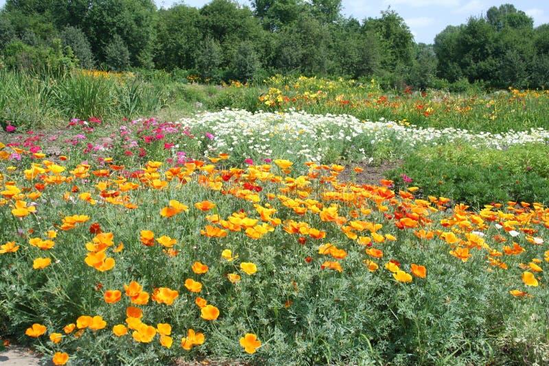 De zomerweide met heldere bloemen stock fotografie