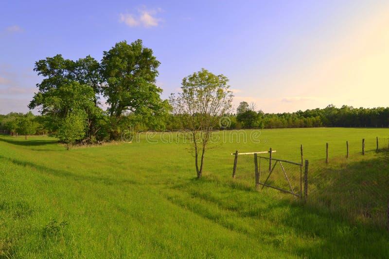 De zomerweide met oude eiken op het grondgebied van Lagere Morava royalty-vrije stock fotografie