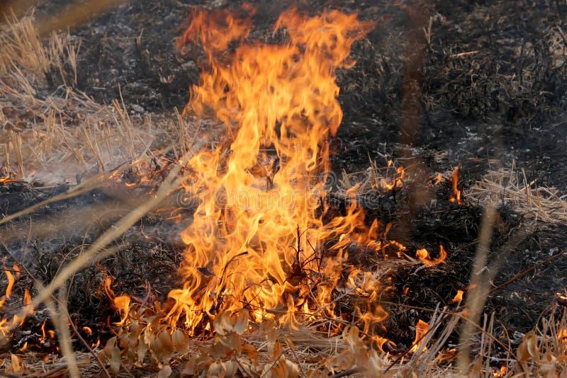 De zomerwildfires die in het Bos bij plattelandsgebied van Khon Kae branden royalty-vrije stock foto's
