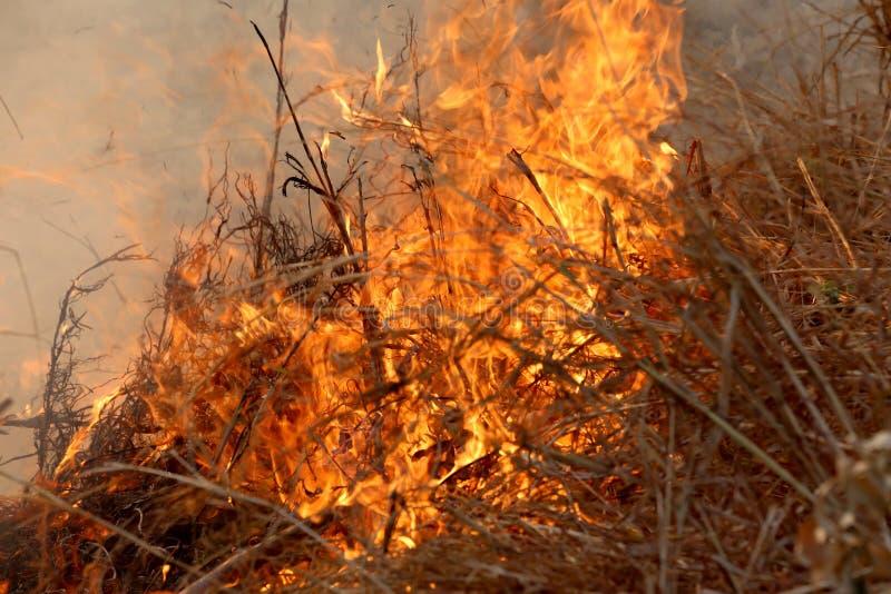 De zomerwildfires die in het Bos bij plattelandsgebied van Khon Kae branden stock foto's