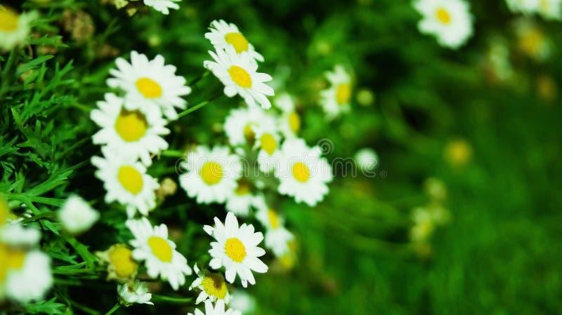 De zomerwildflowers royalty-vrije stock foto