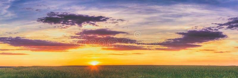 De zomerzon die over landbouwlandschap van groen tarwegebied glanzen stock foto's