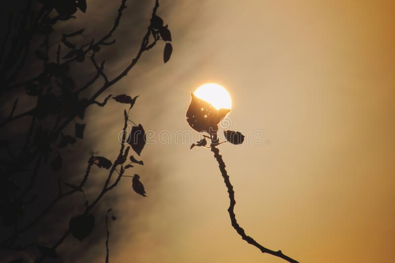 De zon brandt de bladeren royalty-vrije stock afbeelding
