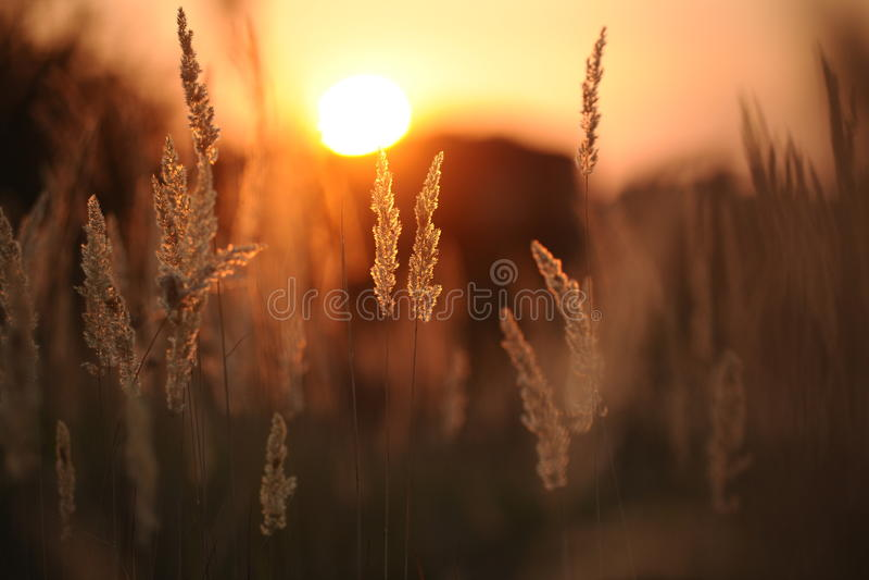 De zon in een gras royalty-vrije stock afbeeldingen