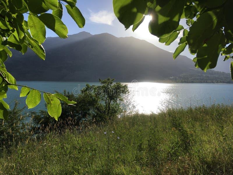 De zon flakkert op de groene bladeren en het meer stock fotografie