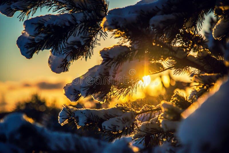De zon glanst in de winterbos royalty-vrije stock fotografie