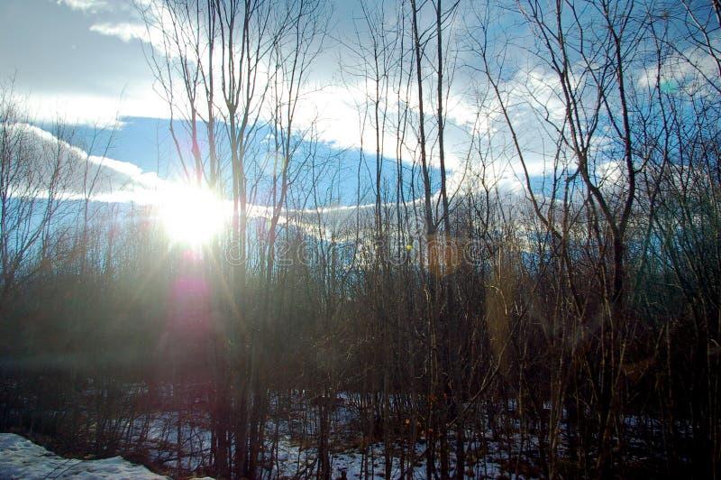 De zon glanst door de bomen stock afbeeldingen
