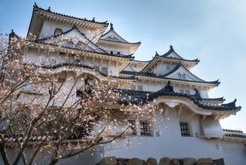 De zon glanst door Cerry-Bloesems in de herfst niet een fout bij het Kasteel van Himeji in Japan stock foto's