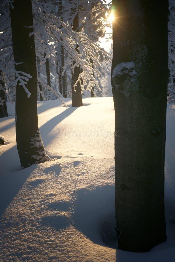 Door de bomen royalty-vrije stock foto's