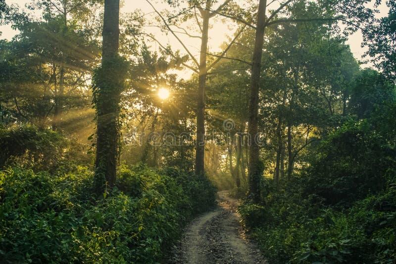 De zon glanst door Dicht Wildernis Bemost Bos in Nepal stock foto