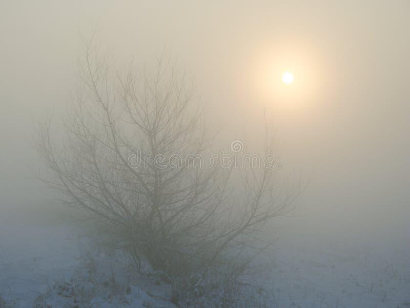 De zon glanst door een laag van mist met een boom in een sneeuwlandschap stock afbeeldingen