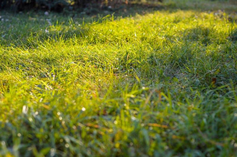De zon glanst door het groene gras stock afbeelding