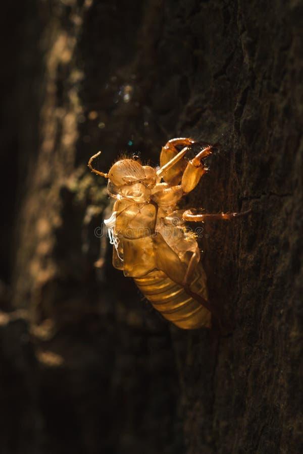 De zon glanst op de cicade in de boom royalty-vrije stock foto's