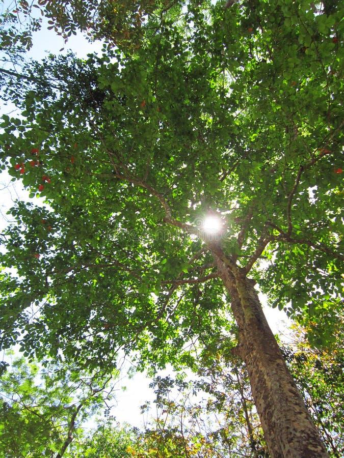 De zon glanst op de bomen stock afbeeldingen