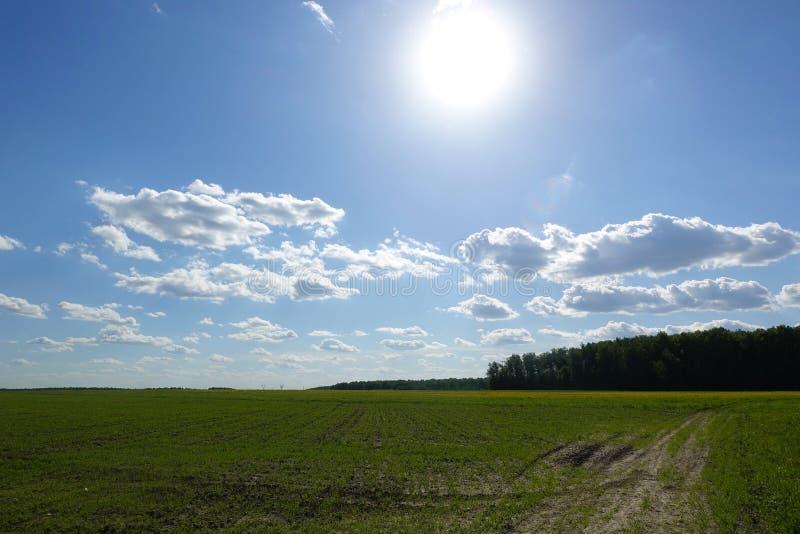 De zon glanst over een grasrijk gebied en betrekt int. hij hemel stock foto's
