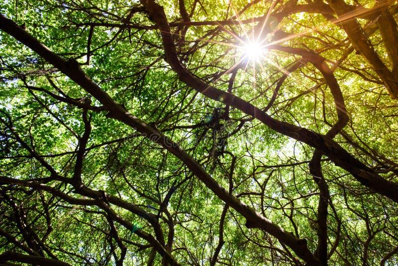 De zon glanst in de schaduw Onder de boom royalty-vrije stock foto