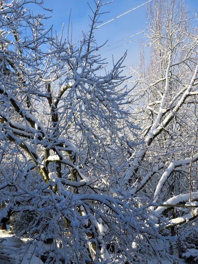 De zon na de sneeuw stock foto's