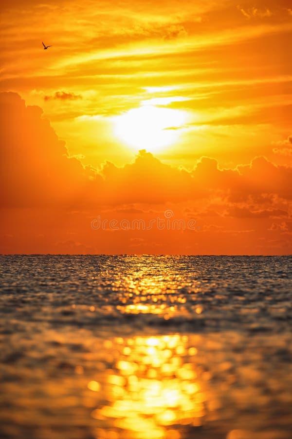 De zon neemt toe Mooie zonsopgang over het overzees en het vliegen bir royalty-vrije stock foto