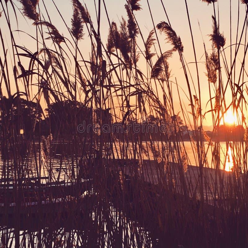 De zon plaatst stock foto