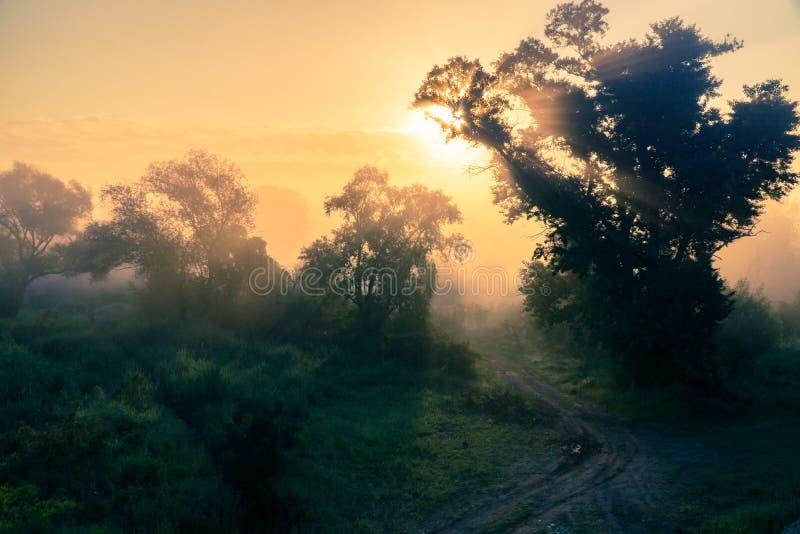 De zon plaatst achter een boom stock afbeeldingen
