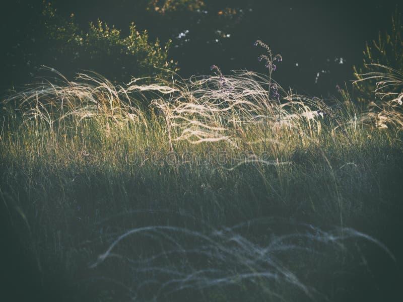 De zon stak omhoog een open plek in het bos aan stock afbeeldingen