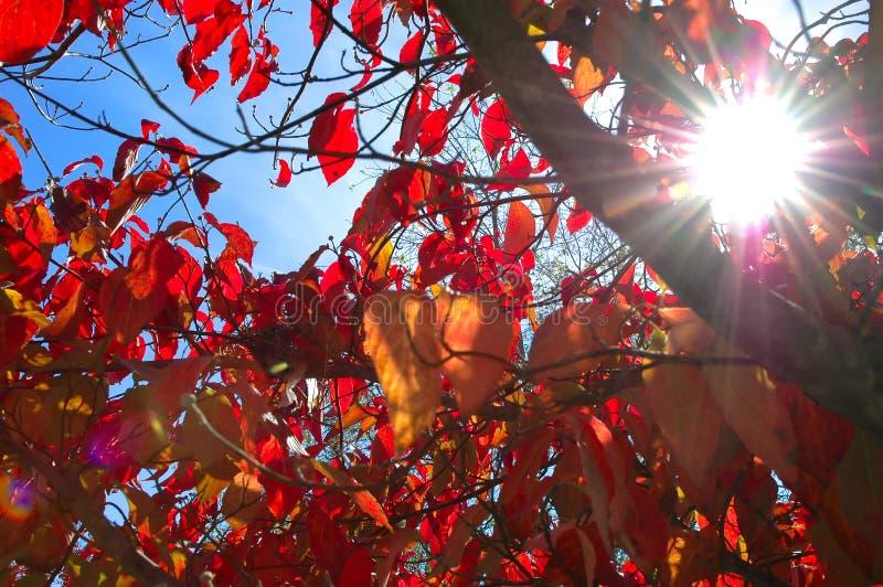 De Zon van de herfst stock foto