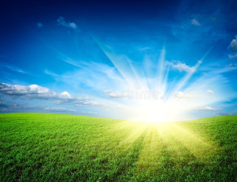 De zon van de zonsondergang en gebied van groen gras royalty-vrije stock afbeeldingen