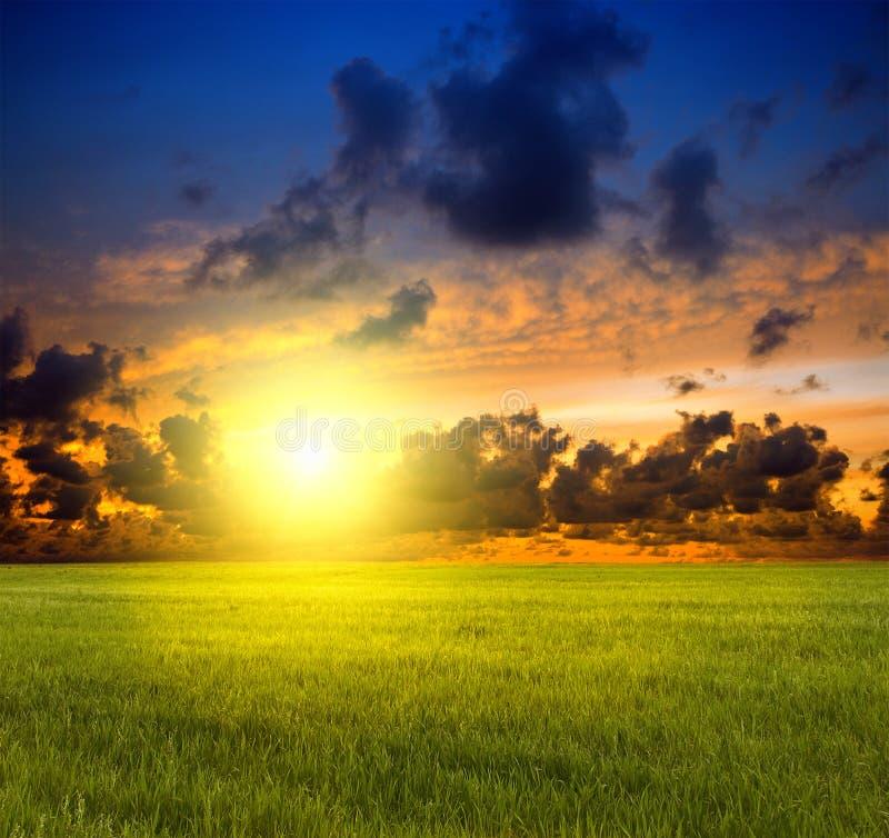 De zon van de zonsondergang en gebied van groen gras stock afbeeldingen