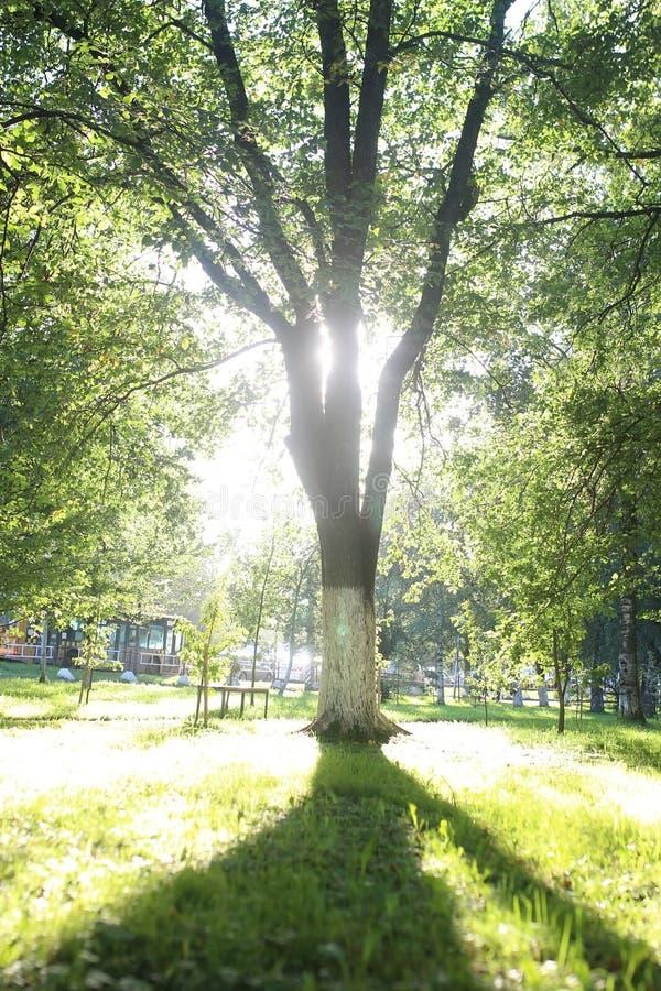 Download De zon van het parkblad stock afbeelding. Afbeelding bestaande uit blad - 107708511
